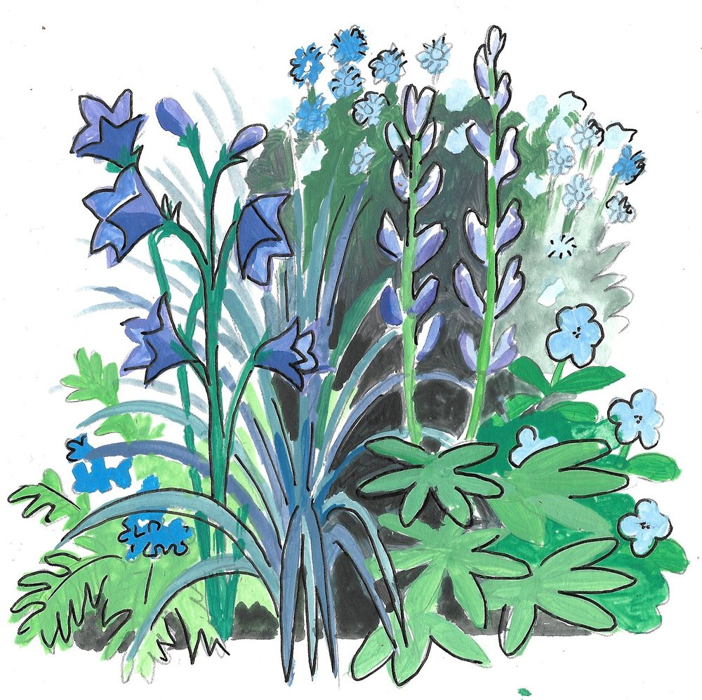 Drawing by Mackenzie of plants to be used in our Blue garden