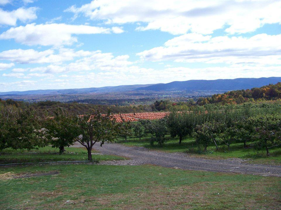 lawrence-farms-orchards-ny_43531.jpg