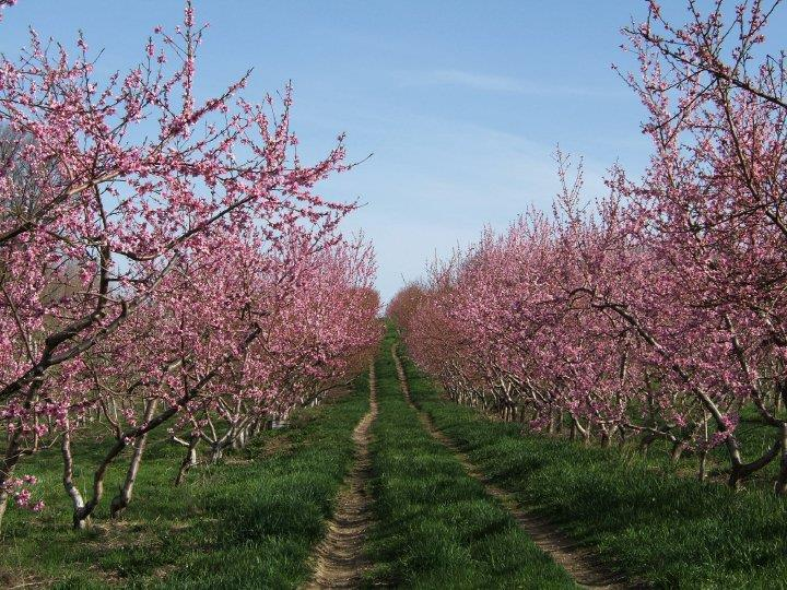 ochs-orchard-ny_44228.jpg