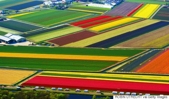 Dutch flower farms