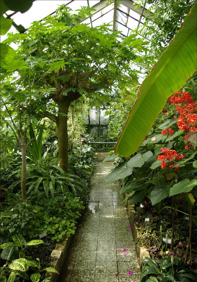 Tropical / heated: more options, controlled climate, warm in winter. Green year round,