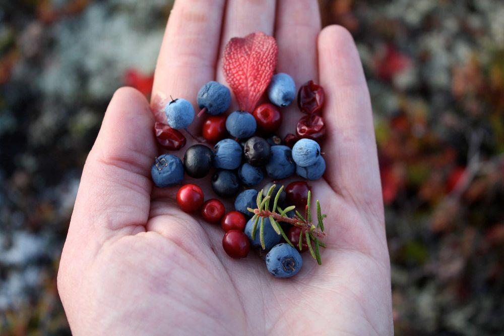 Yukon Food Security
