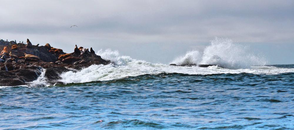 sea lion island.jpg