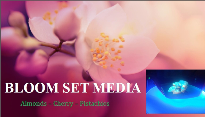 Bloom Set Media