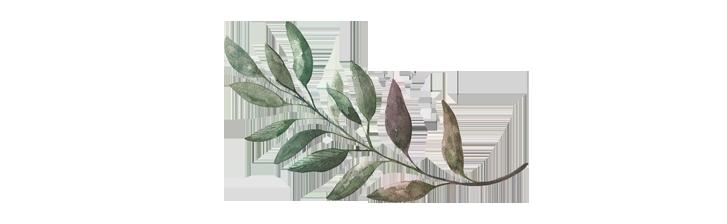 leaf hor.png