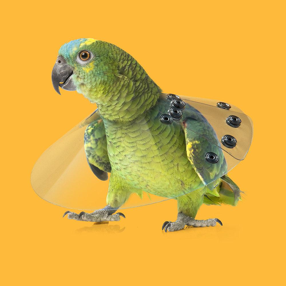 Bird_2018-06_1K.jpg