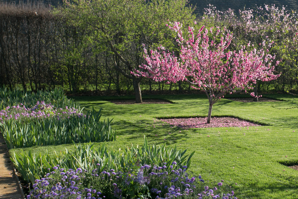 Peach orchard in the Garden