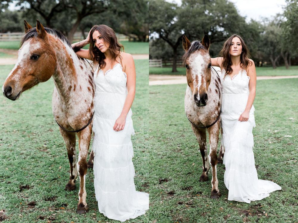 horsecat.jpg