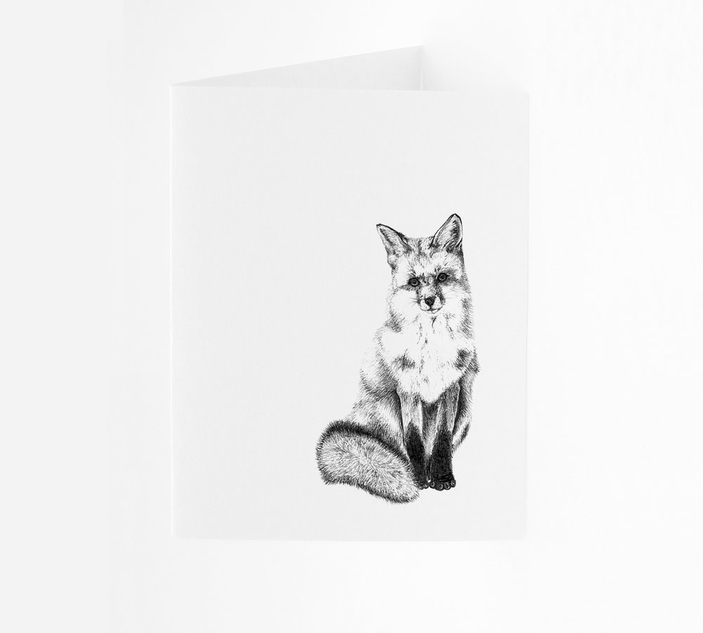 Fox  - Portrait