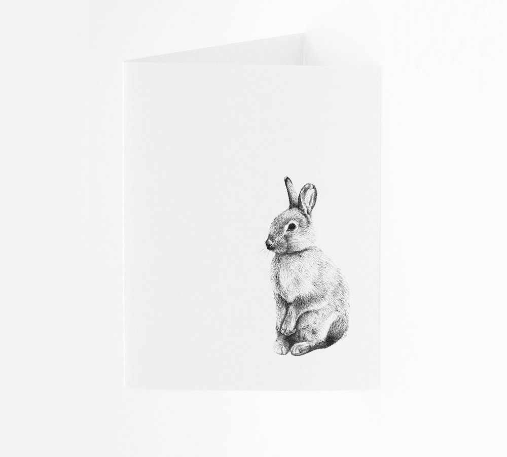 Rabbit - Portrait