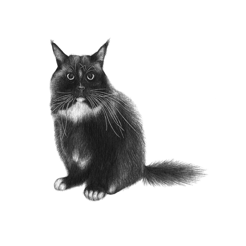 Pudding - The cat with the longest whiskers! 5x7cm