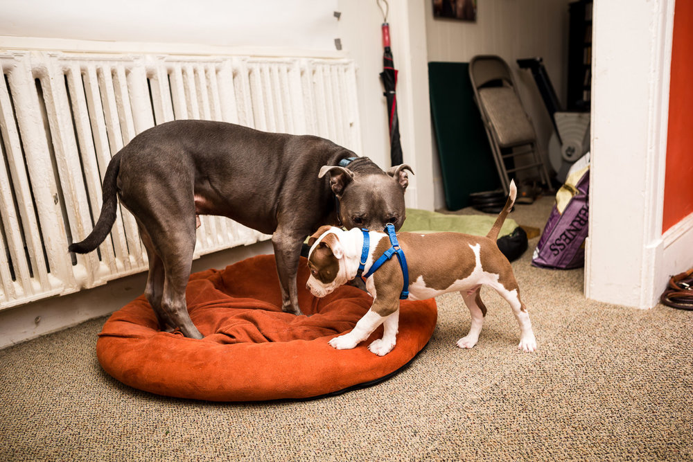 """Back to """"Whose bed is it?"""" This went on for the entire two days."""