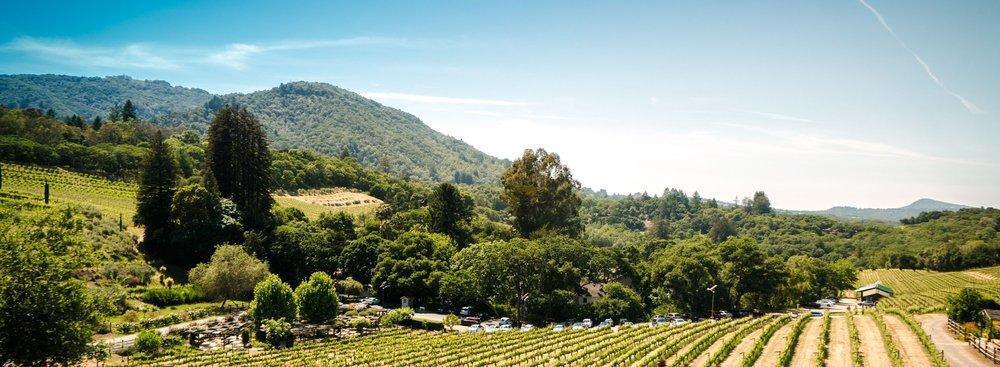 California Wine Country Destination Wedding