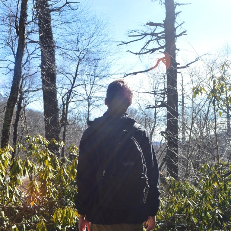 Grandfather Mountain -