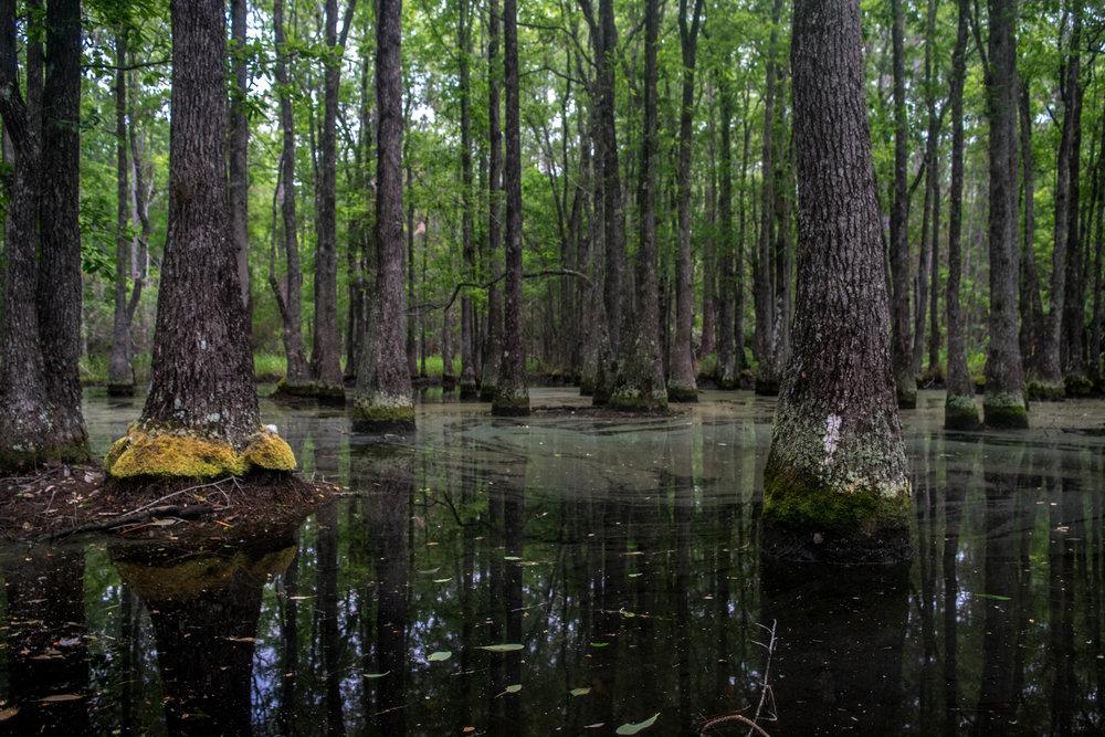 Brooker Creek Preserve -
