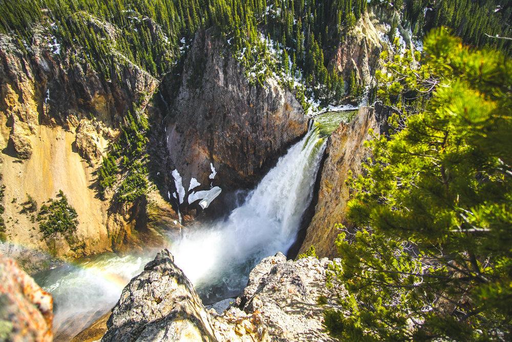 Lower Yellowstone Falls -