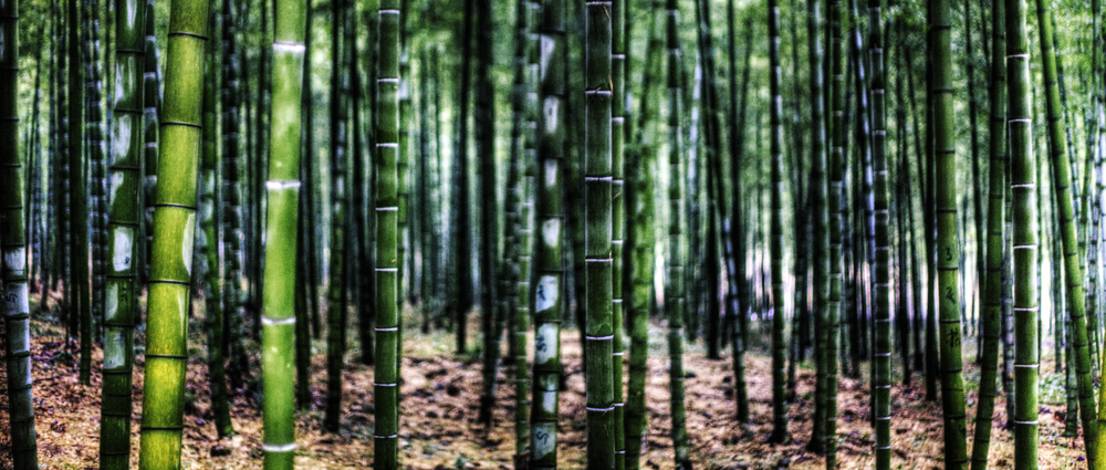 "Photographer: Jakob Montrasio  ""Bamboo"" . Photo provided by: www.flickr.com/photos/yakobusan/4378413866"