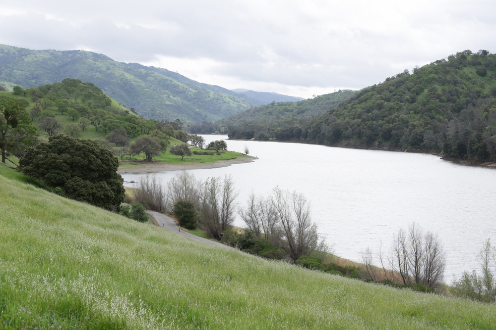 Lake Del Valle in Livermore, CA.  No amount of gray clouds can dull beautiful greens of the landscape.
