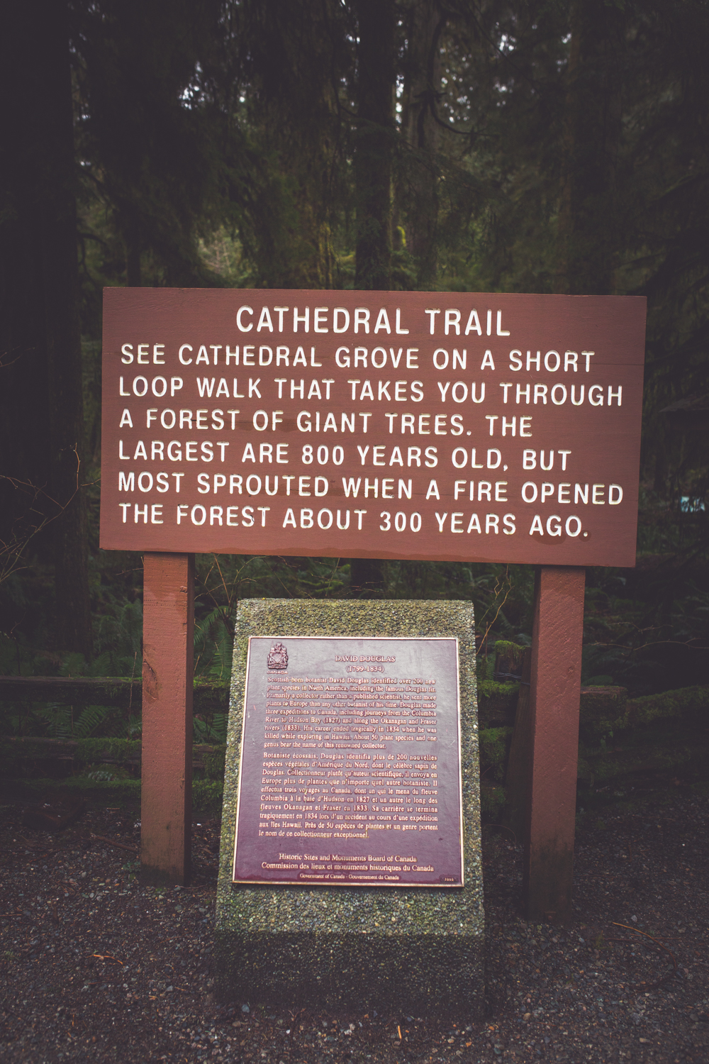 cathedral-grove-elopement-photos.jpg