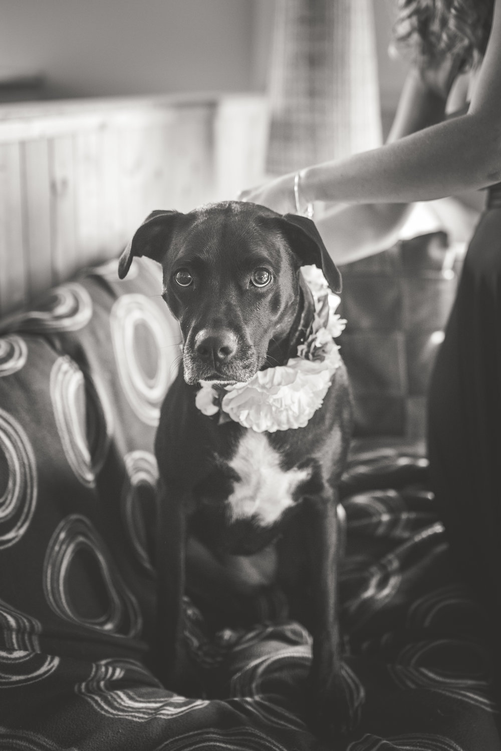 flower girl dog for mountain wedding in courtenay bc