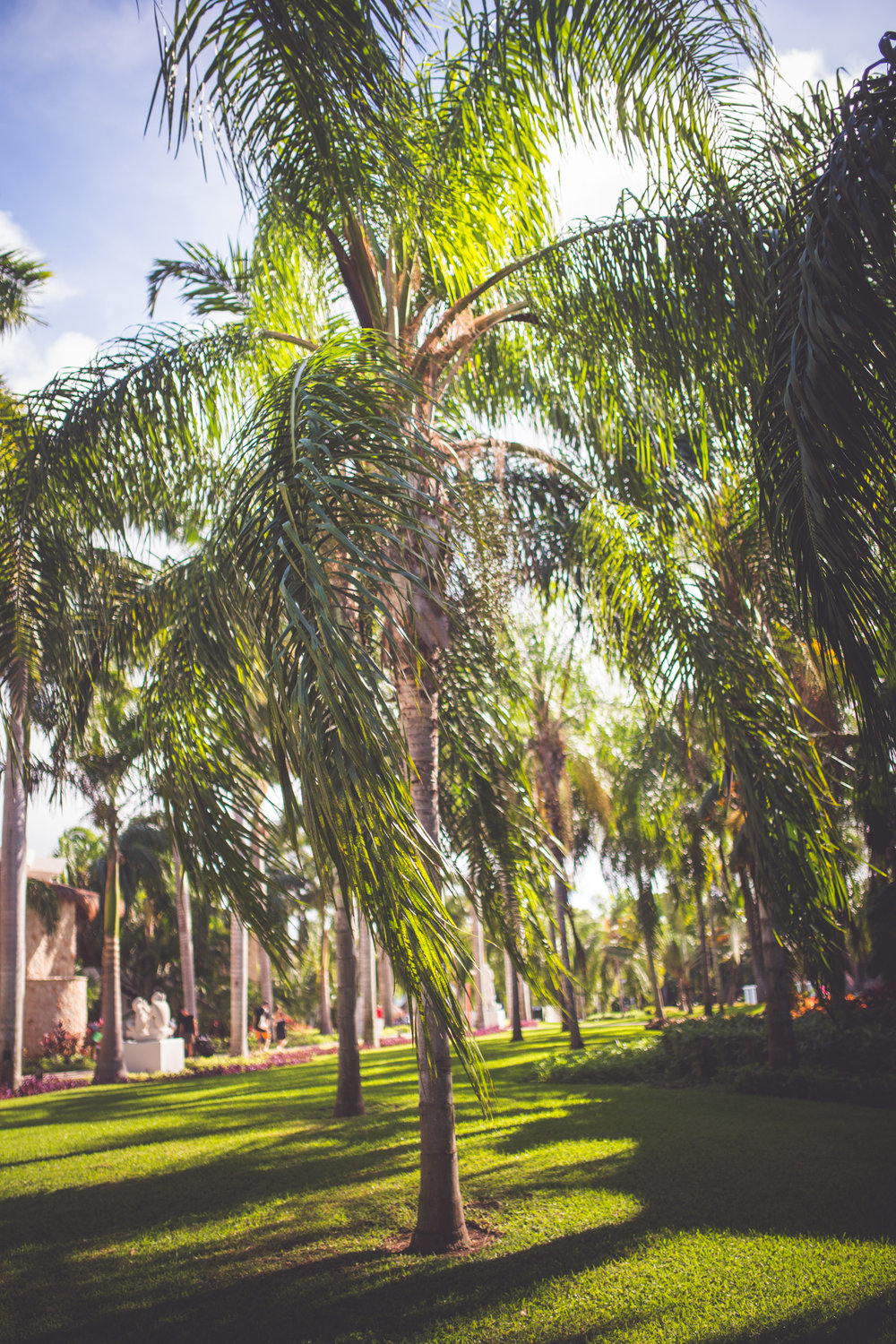 palm trees surround playa del carmen wedding