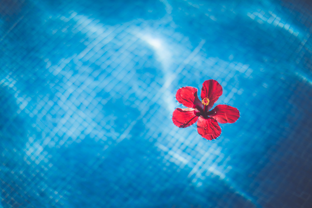 hibiscus flower at sunset princess resort wedding in playa del carmen mexico