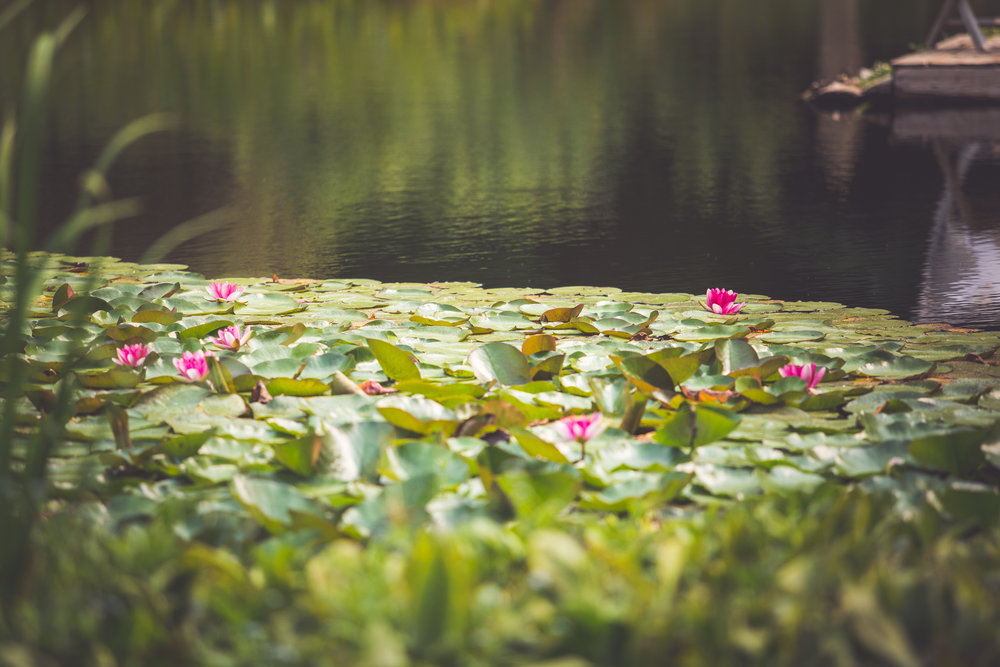 blooming lilypads for wedding backdrop