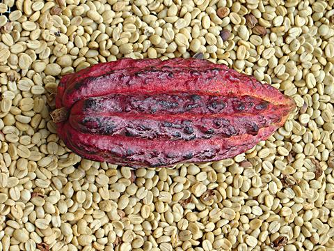 cacao-raw-pod-beans.jpg