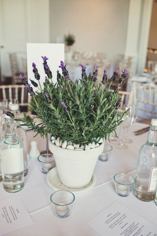 Lavender Plant: The scent from this plant is said to boost mood and brain function.  Clip some off and place it in a vase by your bedside for a great night's sleep, too.