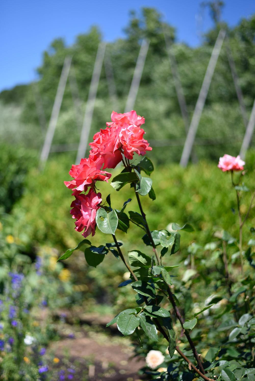 McEvoy Ranch Extra Virgin Olive Oil & Body Care | Petaluma, Ca | asavvylifestyle.com