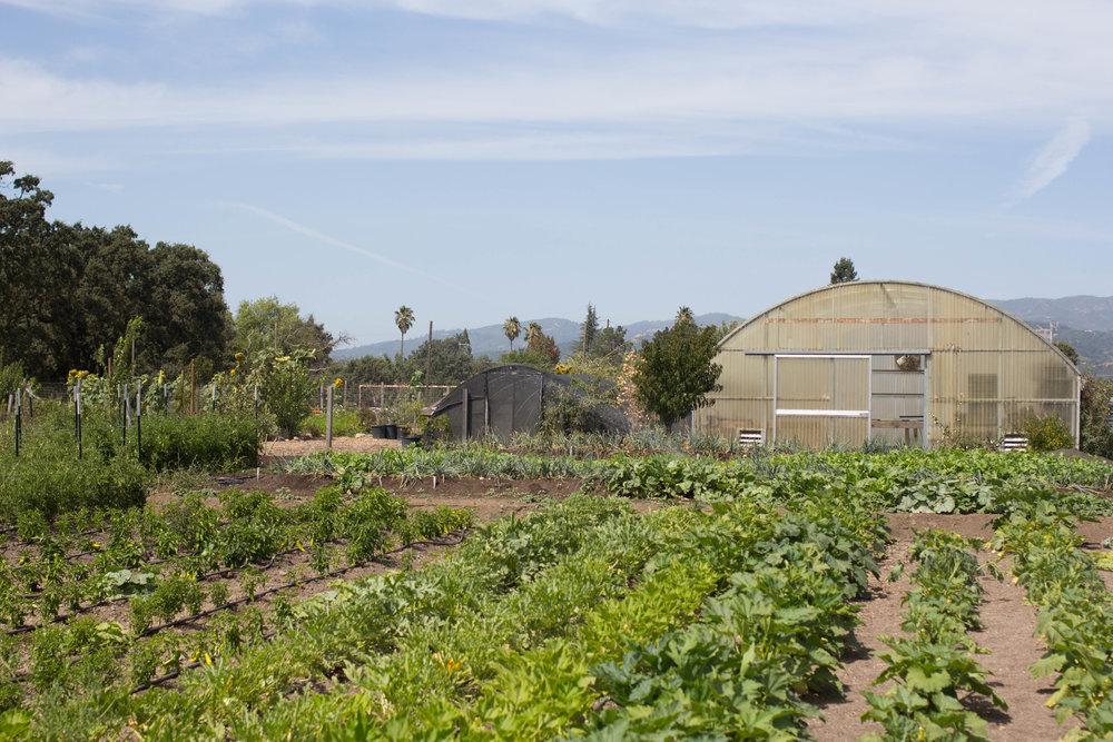 sonoma broadway farm