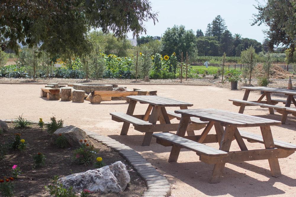 sonoma broadway farm picnic
