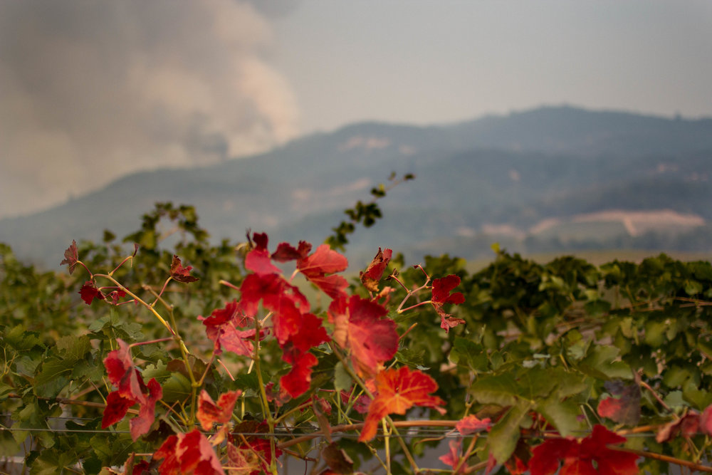 Wine Country Fires: A Note From Our Editor, Emily Rose Belle