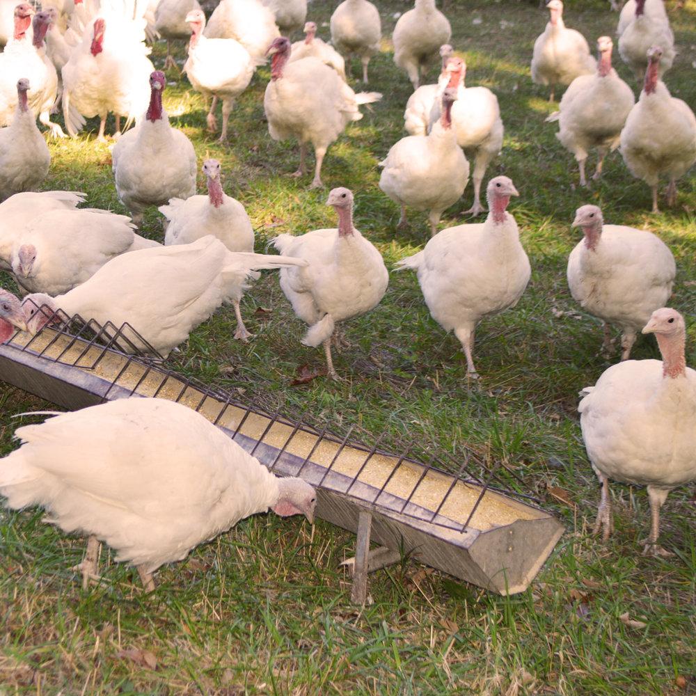 Farm Tour -