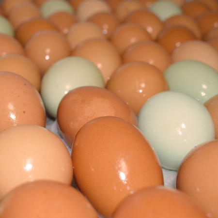 DaSilvaFarm_Eggs_SocialMediaThumbnail.jpg