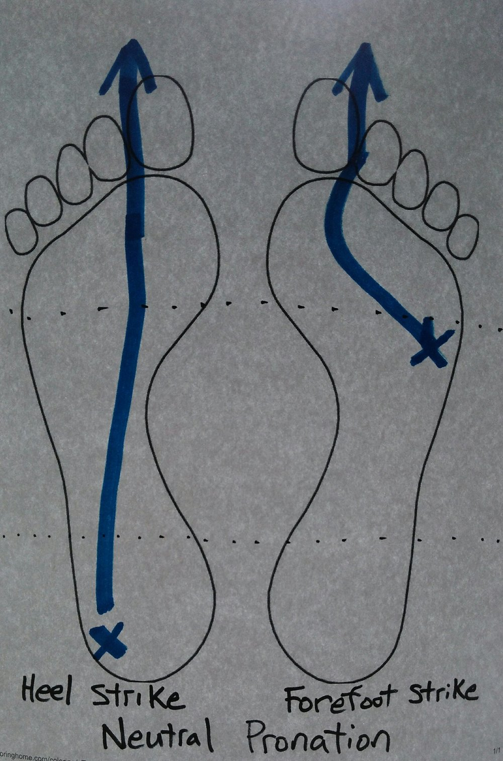 Pronation occurs during both heel striking and forefoot striking. The above shows a neutral progression of pronation in both heel striking and forefoot striking individuals.