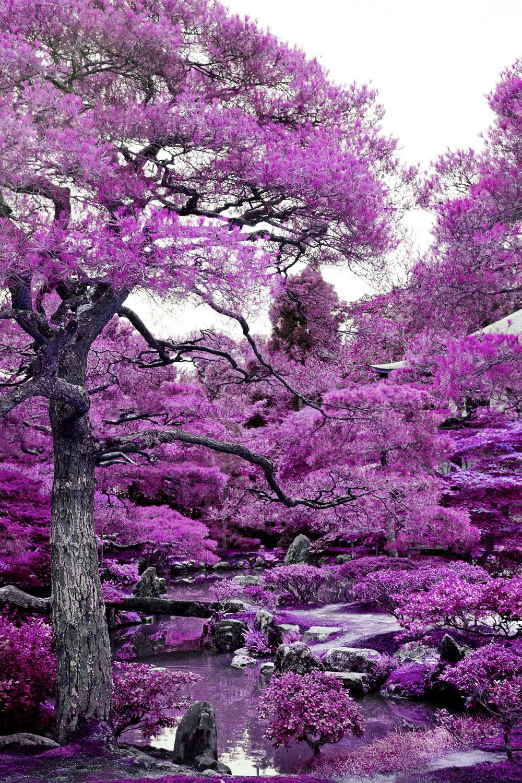 Infrared - Sakura Pink
