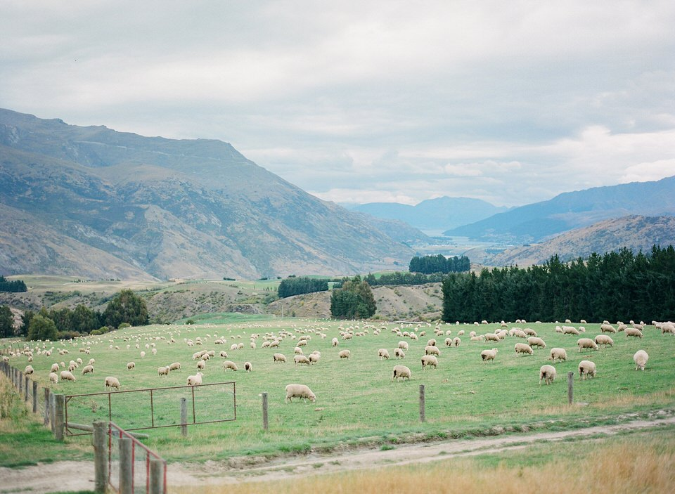 Fine Art Film Travel Photography Queenstown_0010.jpg
