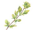 leaf 7.jpg