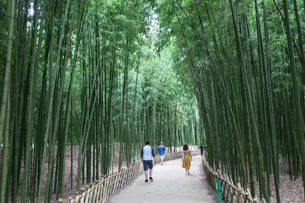 Ulsan Bamboo Forest