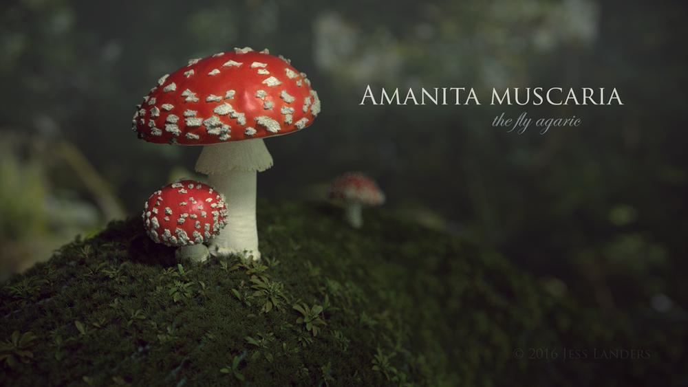 AmanitaMuscaria.png