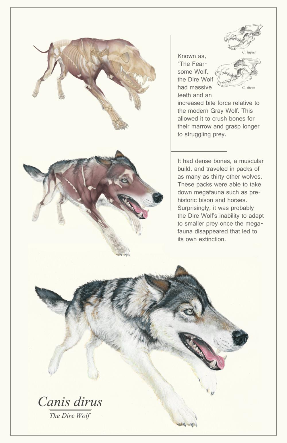 direwolfposterweb.png