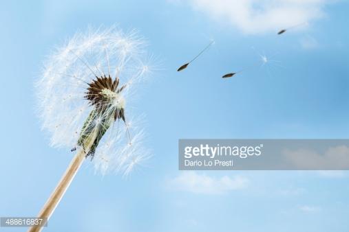 Photo by Dario Lo Presti/iStock / Getty Images