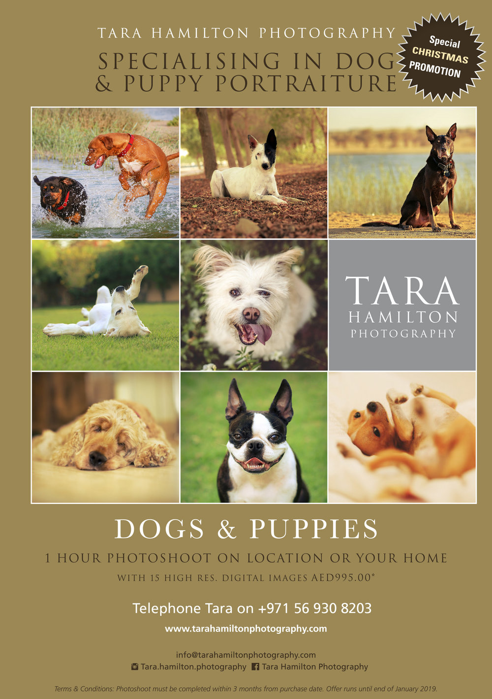 Tara_flier DOGS-Nov 2018 draft 5.jpg