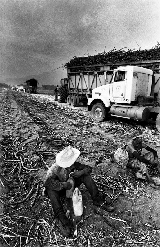 sugarcanes07.jpg