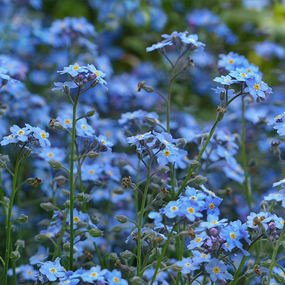 Sininen -
