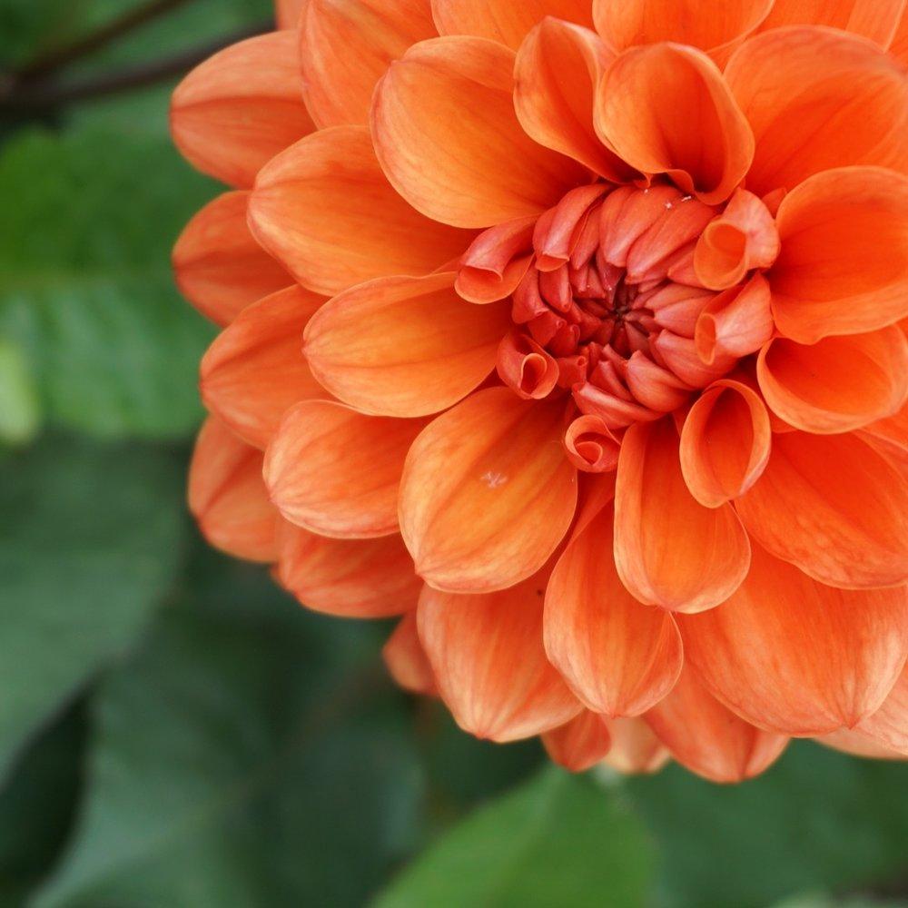 Oranssi -