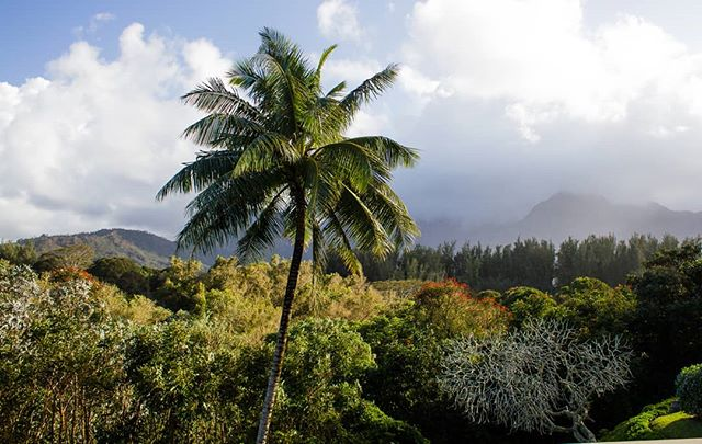 Balcony view on the North shore of Kauai in Hanalei. . . . #hawaii #kauai #hanalei #tropical #travel #hawaiilife #hawaiistagram