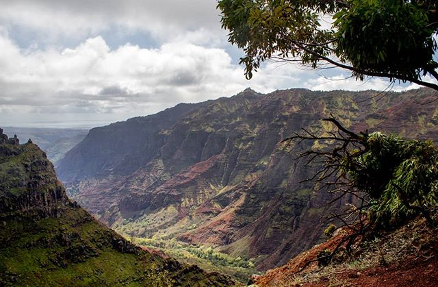 Waimea Canyon. Did a rainy and muddy hike out to a waterfall. Incredible place to be. . . . #hawaii #kauai #waimea #waimeacanyon  #hawaiilife #hiking #hikehawaii #canyon