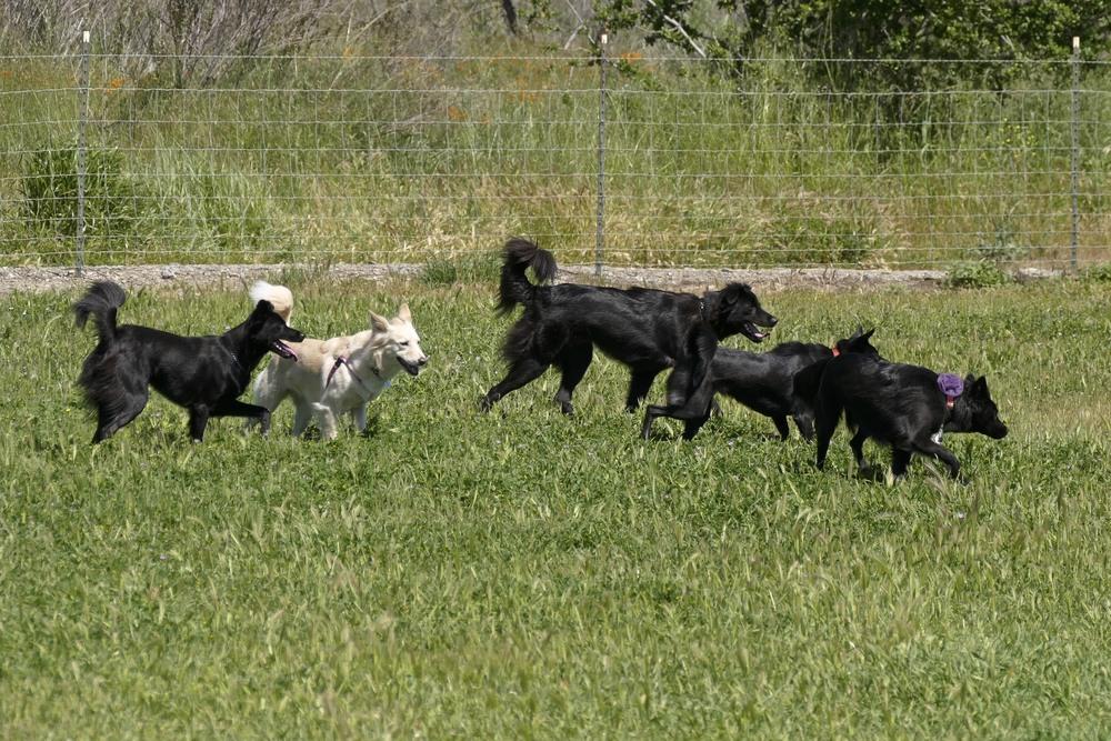 dogs luna meadow.jpg